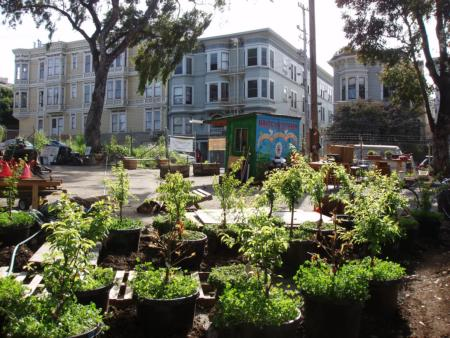 Trees are pruned for backyard orchards at Hayes Valley Farm, San Francisco