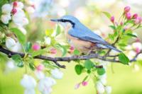 Aves_Birds