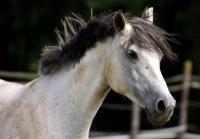 Caballos_Horses