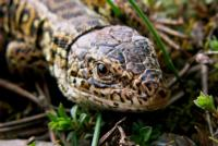 Reptiles_Reptiles